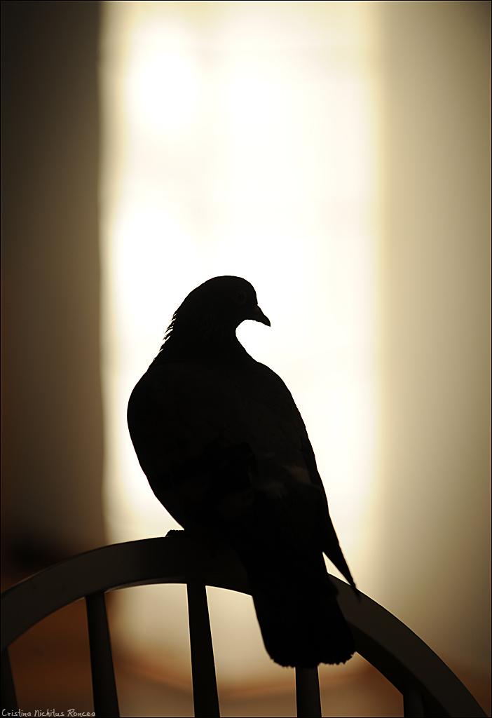 the little bird - foto Cristina Nichitus Roncea
