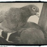 little bird 2 - foto Cristina Nichitus Roncea