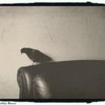 little bird 4 - foto Cristina Nichitus Roncea