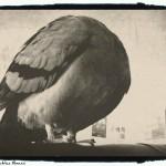 little bird 5 - foto Cristina Nichitus Roncea