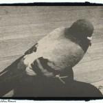little bird - foto Cristina Nichitus Roncea