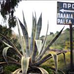 Paleo Chora - Aegina Island - foto Cristina Nichitus Roncea