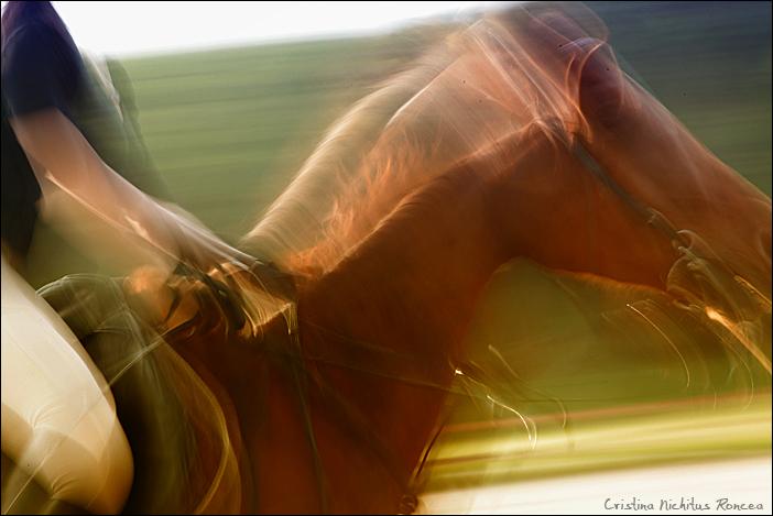 Poveste despre cai 02 - foto Cristina Nichitus Roncea