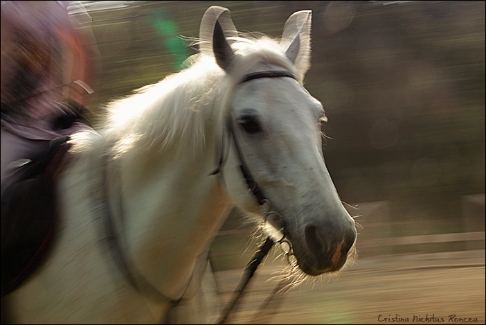 Poveste despre cai 03 - foto Cristina Nichitus Roncea