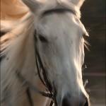 Poveste despre cai 04 - foto Cristina Nichitus Roncea