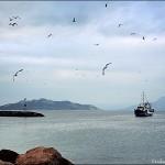 fishermen in Aegina Island - foto Cristina Nichitus Roncea
