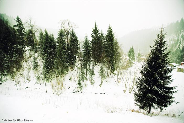 Peisaj de iarna, la Manastirea Paltin, Petru Voda